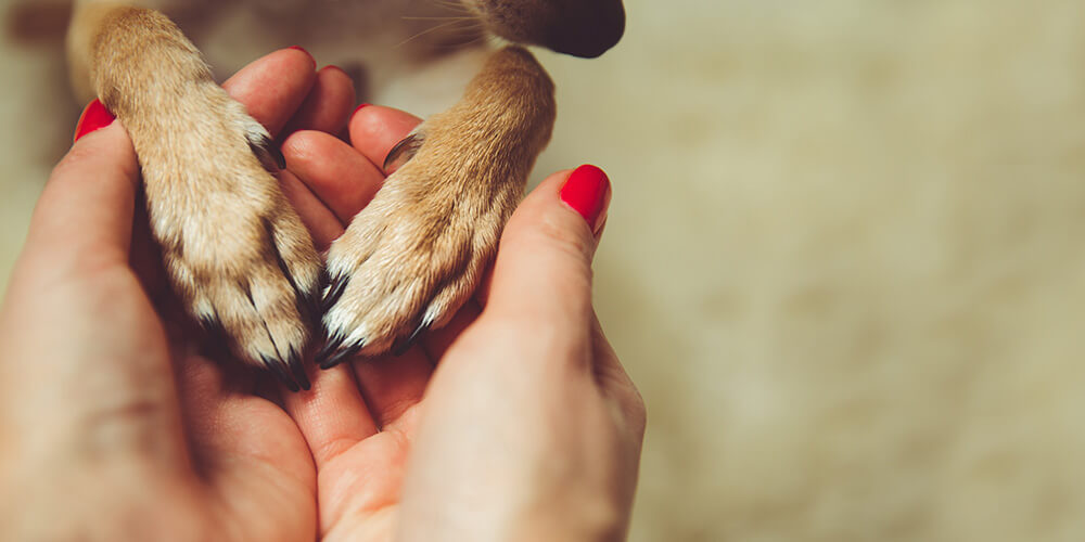 person holds animals paws